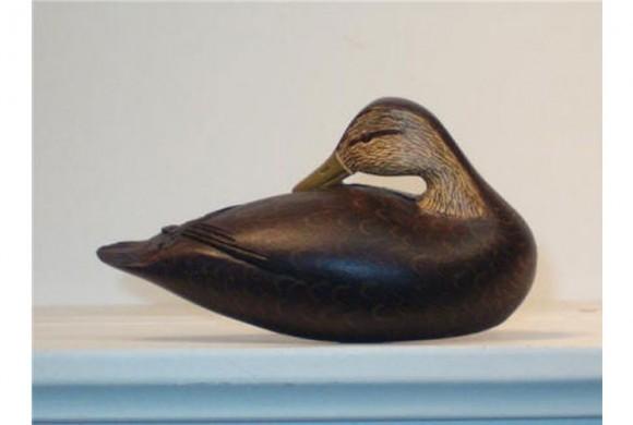 Cape Cod Preening Black Duck
